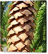 Pine Cone Art Prints Pine Tree Artwork Baslee Troutman Acrylic Print