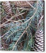 Pine Cone Brush Acrylic Print