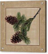 Pine Cone Design Acrylic Print