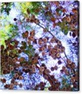 Pine Cone Heaven Acrylic Print