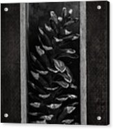 Pine Cone In A Box Still Life Acrylic Print