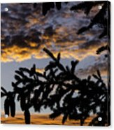 Pine Cone Sunset Acrylic Print