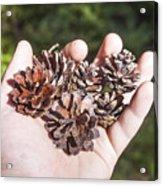 Pine Cones Hand Acrylic Print
