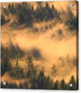 Pine Forest And Fog Acrylic Print