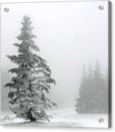 Pine In Snow Acrylic Print