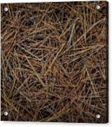Pine Needles On Forest Floor Acrylic Print