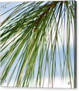 Pine Needles Series 3 Acrylic Print