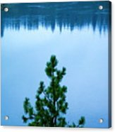 Pine On The River Acrylic Print