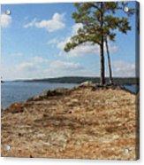 Pine Perch Acrylic Print