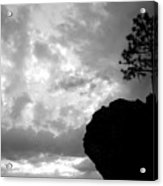 Pine Silhouette Acrylic Print