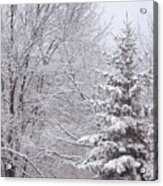 Pine Tree - Winter Scene Acrylic Print