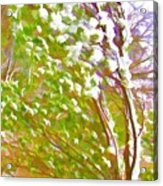 Pine Tree Covered With Snow Acrylic Print by Lanjee Chee