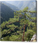 Pine Tree On Mountain Landscape Acrylic Print