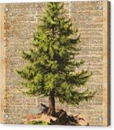 Pine Tree,cedar Tree,forest,nature Dictionary Art,christmas Tree Acrylic Print