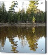 Pine Trees Across Mississippi River Acrylic Print
