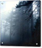 Pine Trees In Fog Acrylic Print