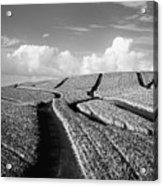 Pineapple Field - Bw Acrylic Print