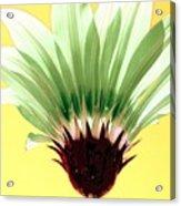 Pineapple Flower Acrylic Print