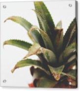 Pineapple Top- Art By Linda Woods Acrylic Print