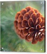 Pinecone-1 Acrylic Print