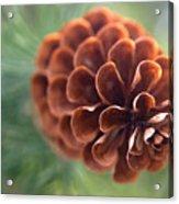 Pinecone-2 Acrylic Print