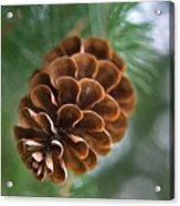 Pinecone-3 Acrylic Print
