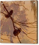 Pinecone Overlay Bright Horizontal Acrylic Print