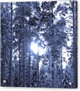 Pines 4 Acrylic Print