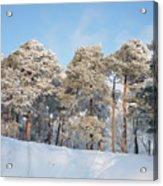 Pines Acrylic Print