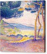 Pines Along The Shore, 1896 Acrylic Print
