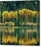 Pines And Aspens Acrylic Print