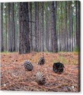 Pines And Needles 4 Acrylic Print