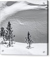 Pines In Snow Drifts Black And White Acrylic Print