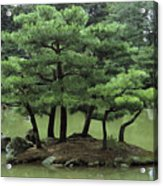 Pines On Island In The Gardens Acrylic Print