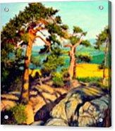 Pines On The Rocks Acrylic Print
