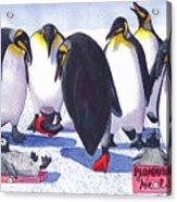 Pinguino Heels Acrylic Print