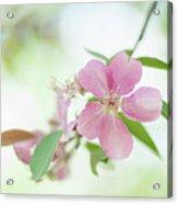 Pink Airy Marvel Acrylic Print