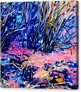 Pink Algae Acrylic Print