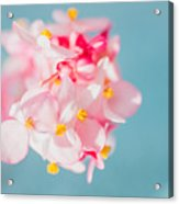 Pink And Baby Blue Acrylic Print
