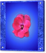 Pink And Blue Acrylic Print