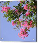 Pink And Blue Canopy Acrylic Print