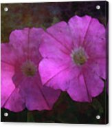 Pink And Gold 6156 Dp_2 Acrylic Print