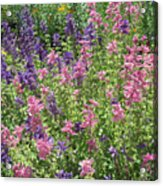 Pink And Lavender Acrylic Print