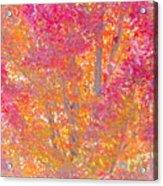 Pink And Orange Autumn 2 Acrylic Print