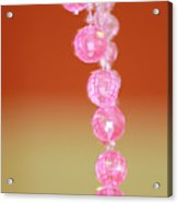 Pink And Sassy Acrylic Print