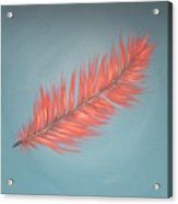 Pink And Teal Feather Acrylic Print
