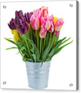 Pink And Violet  Tulips Acrylic Print