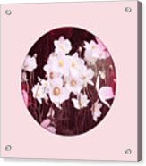 Pink And White Anemones Acrylic Print