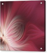 Pink And White Flower 0610 Acrylic Print