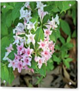 Pink And White Flowers Acrylic Print